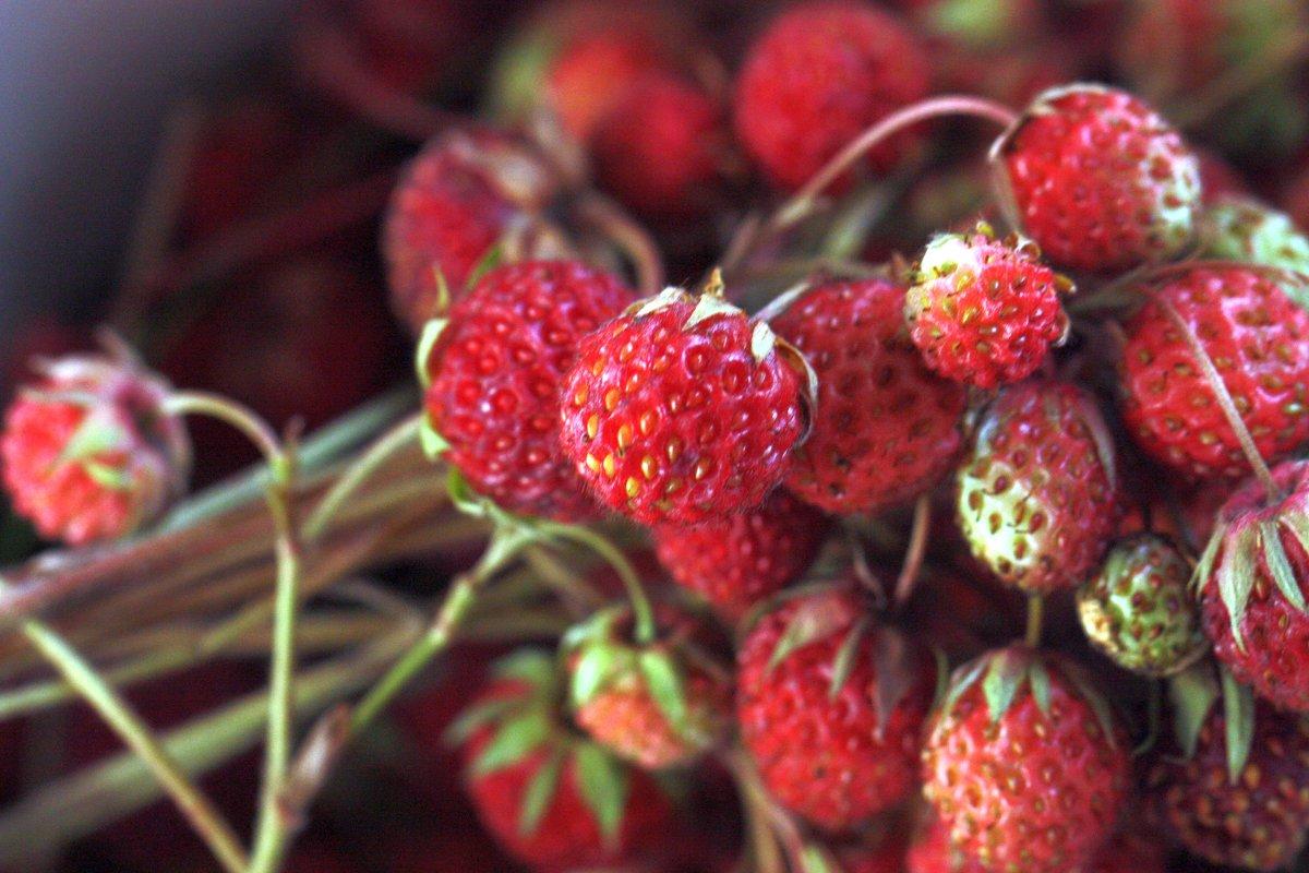 Сладка ягода - ZNatasha -