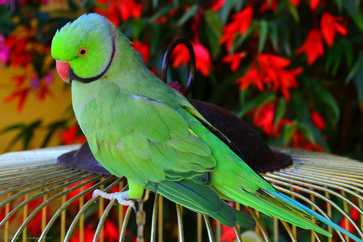 Мой любимый попугай - Татьяна Каневская