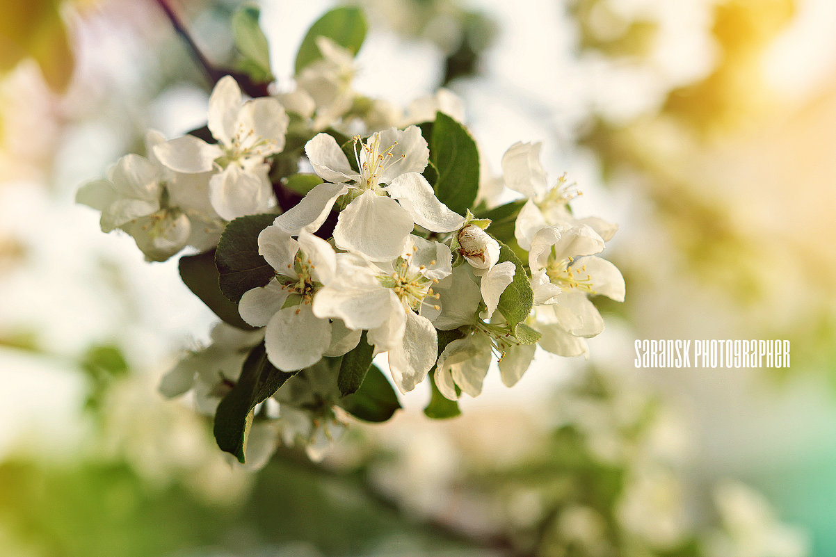 цветы - Mari - Nika Golubeva -Fotografo
