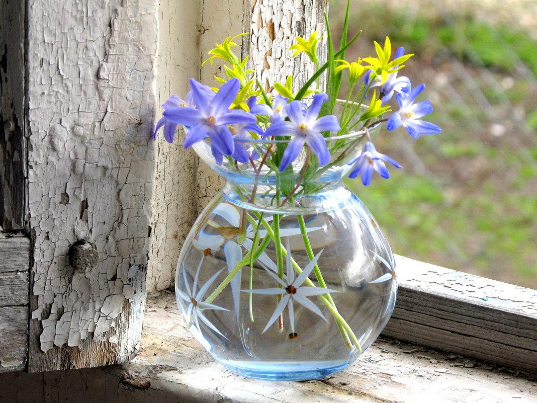 Первоцветы - Жанна