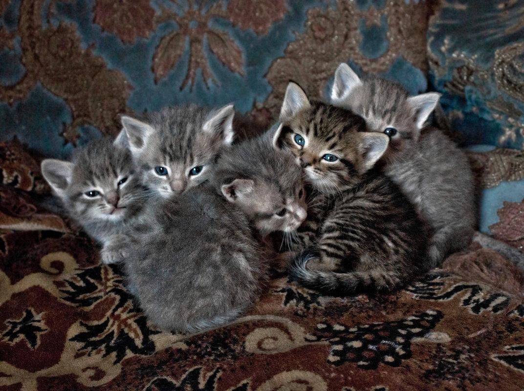 Котята - Надежда
