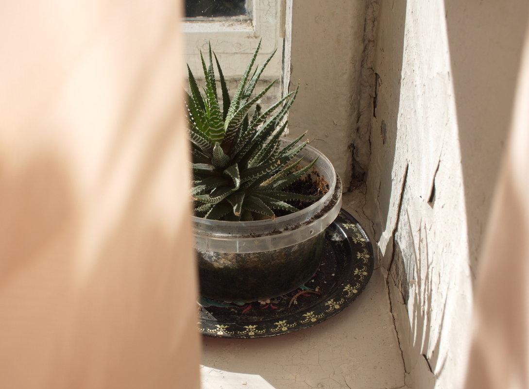 Майская елка на задрипанном окне - Лира Цафф