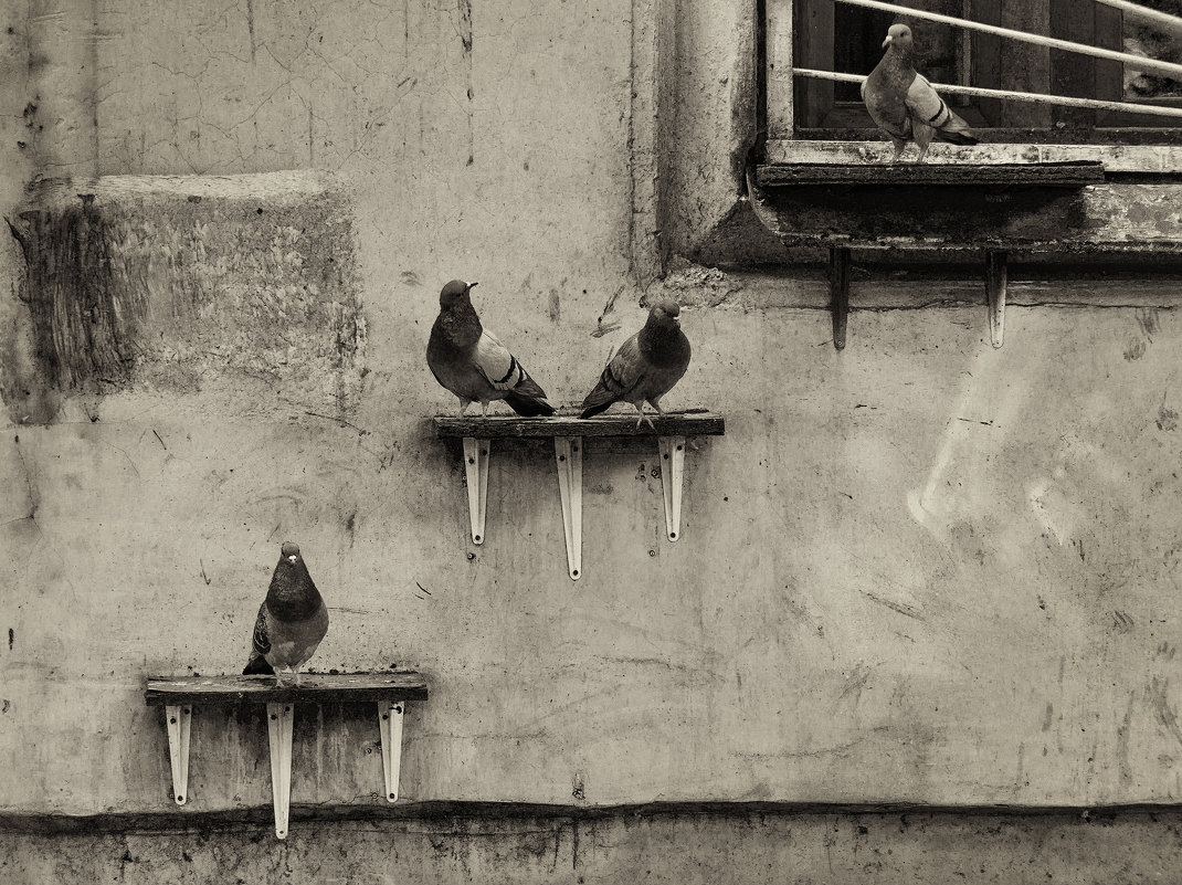 Соседи по коммуналке - Вадим
