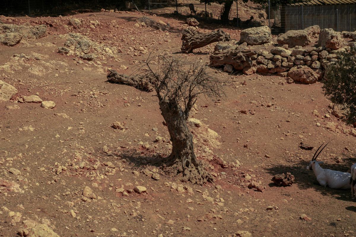. . и на Марсе будут яблони цвести - Борис