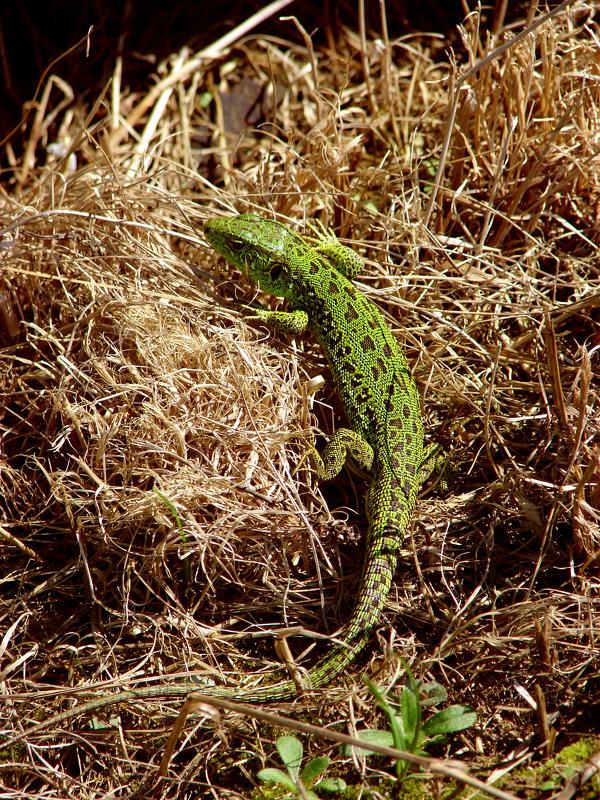 Зеленое чудовище - Aleck Horn Antony