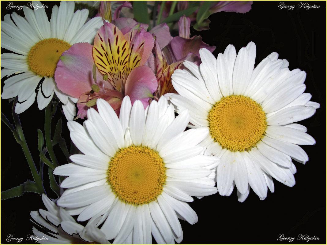 цветы - Georgy Kalyakin
