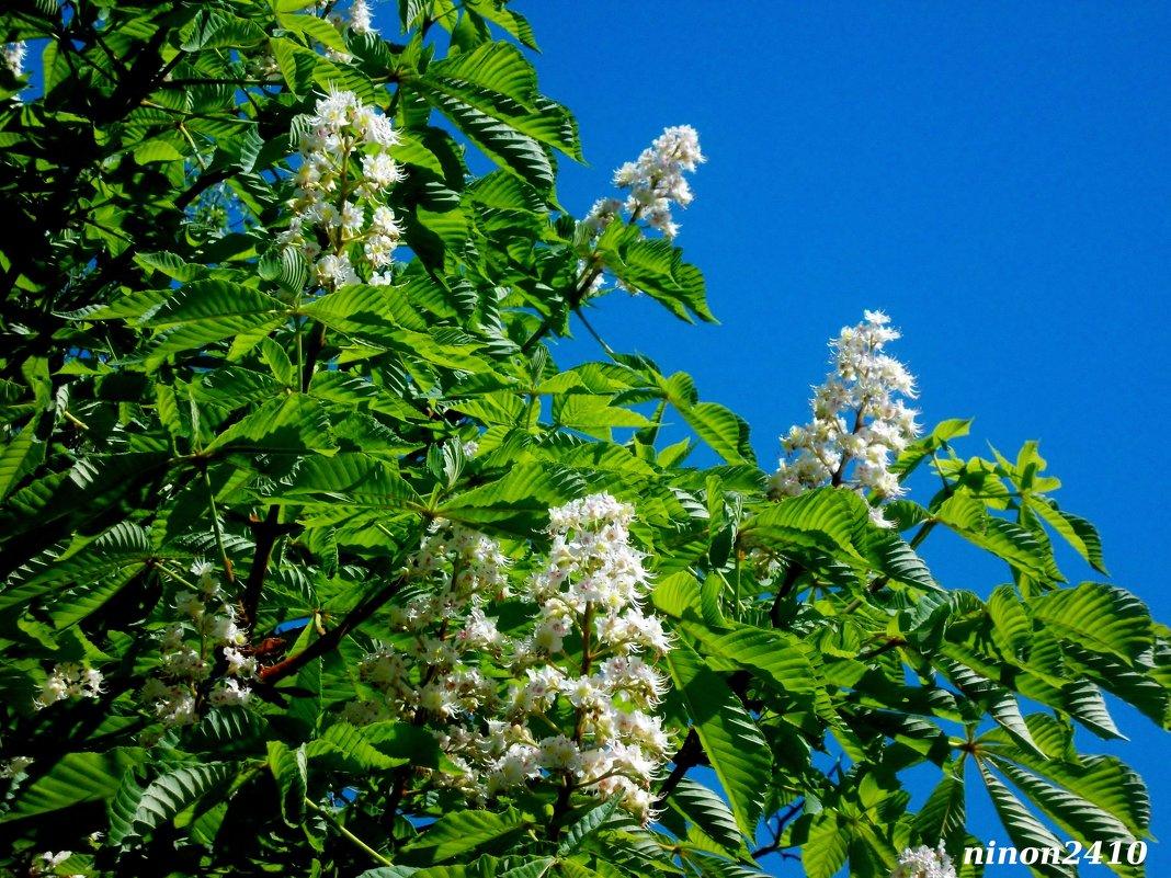 Каштановая весна - Нина Бутко