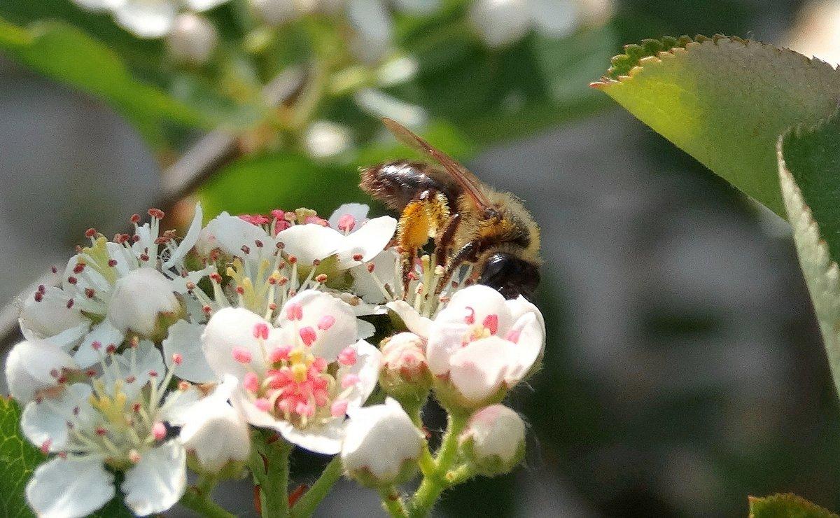 Пчела собирает нектар - Александр Бойченко
