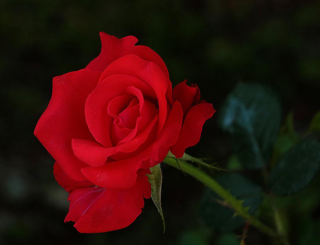Зрелость любви - Светлана
