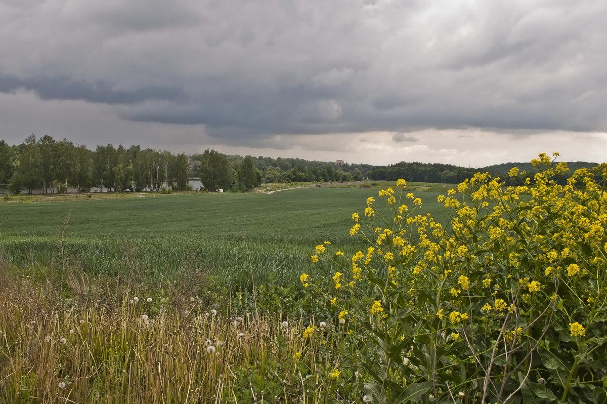 В полях возле реки - Ольга Винницкая (Olenka)