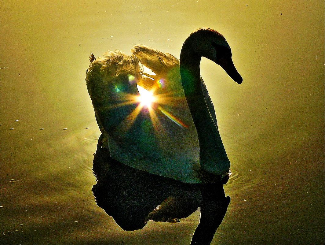 Лебединое озеро  Солнечный - олег свирский