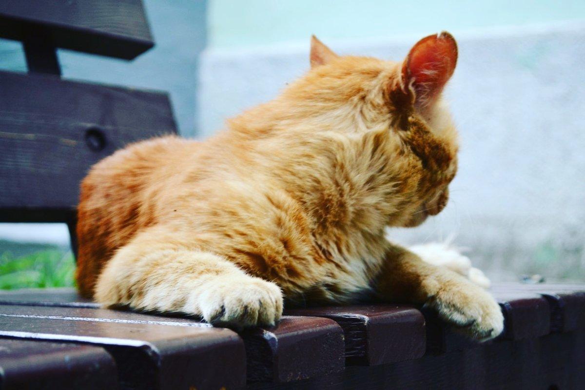 Кошка со своей  историей - Натали