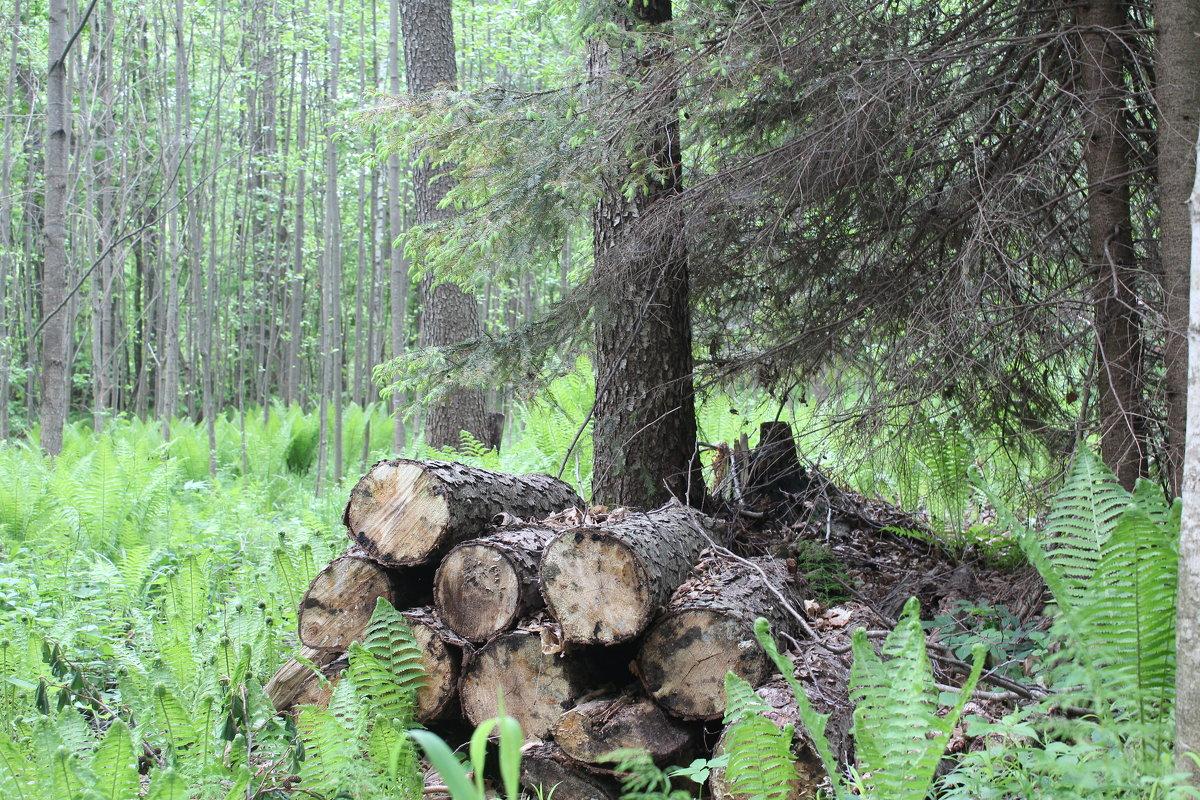 бревна в лесу - Светлана Рябова