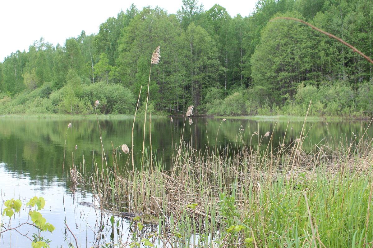 озеро - Светлана Рябова