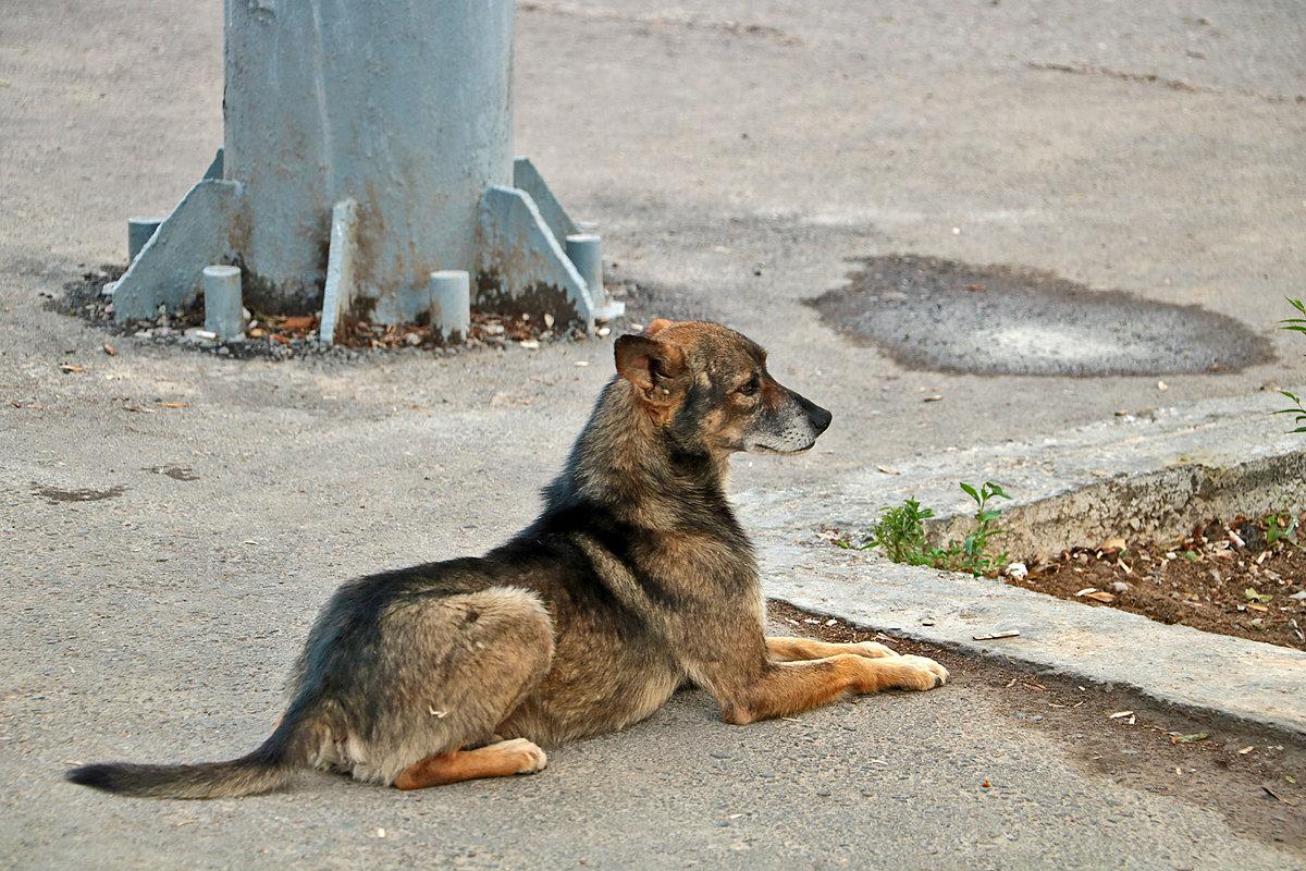 Грустный бездомный пес - Светлана