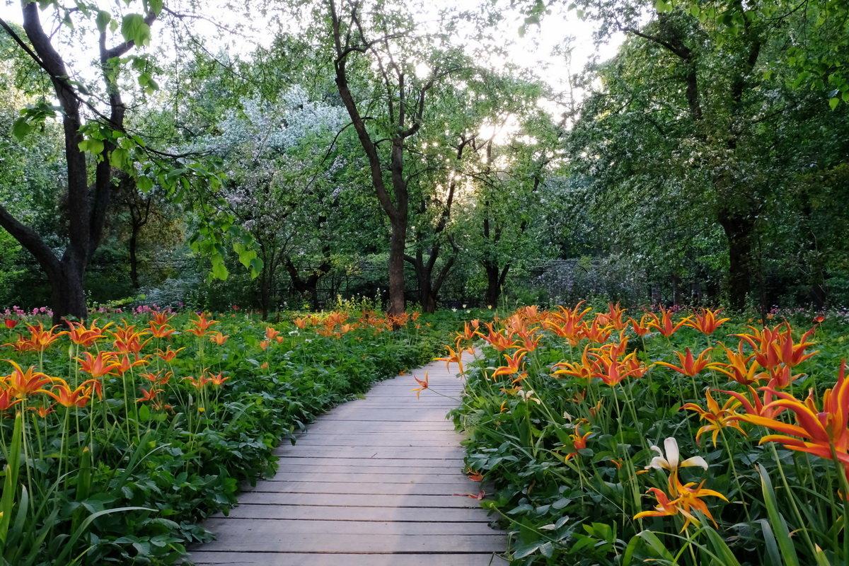 Аптекарский огород на пр.Мира - Игорь
