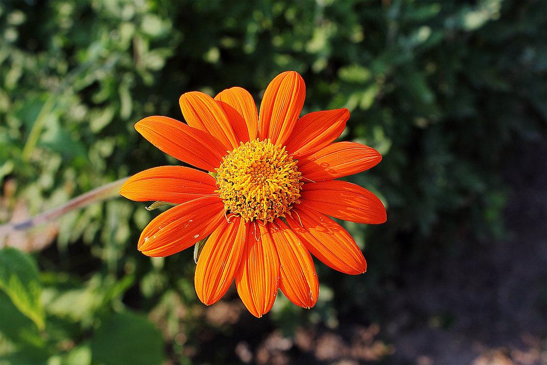 Представь, что я... апельсинчик... - Dmitry Saltykov