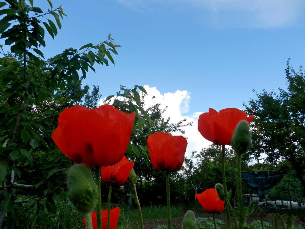 Красота земная - Люша
