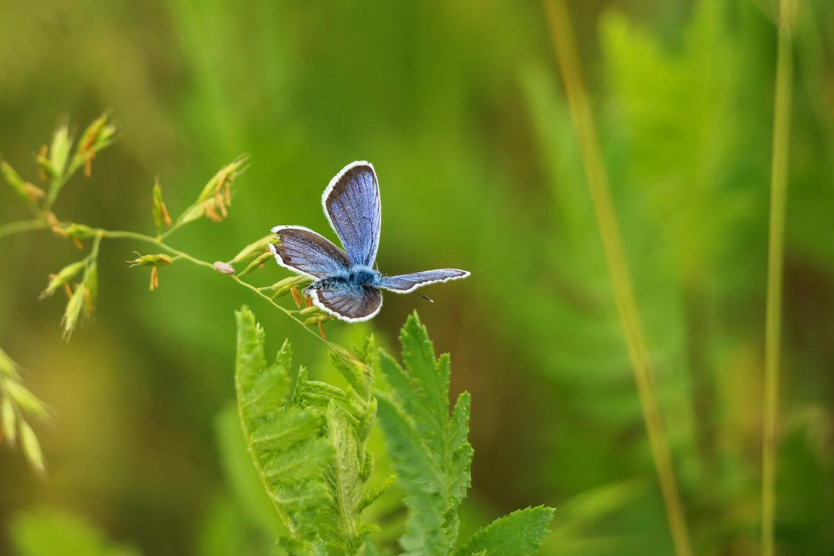 Бабочка - Владимир Переклицкий
