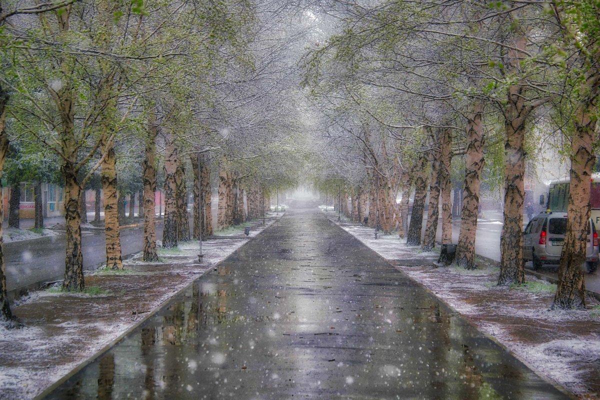 майский снег... - Alexandr Staroverov