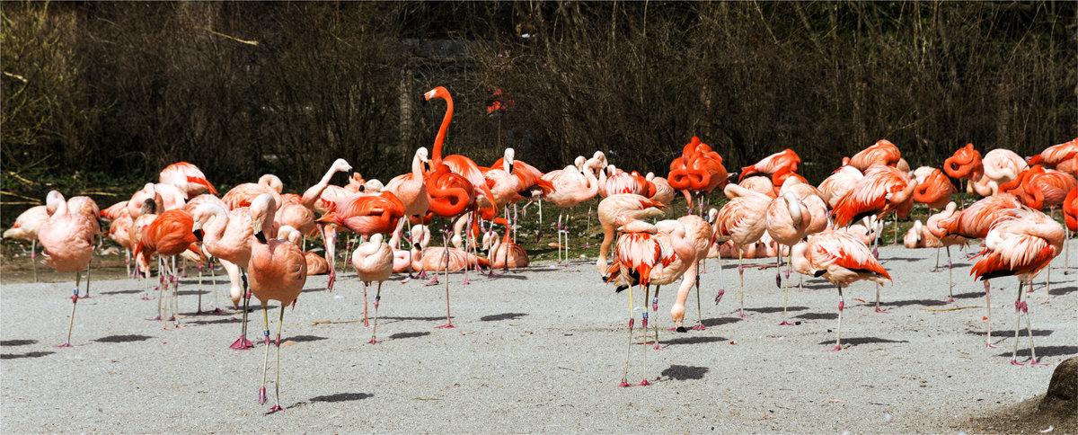 фламинго в пражском зоопарке - Grigory Spivak