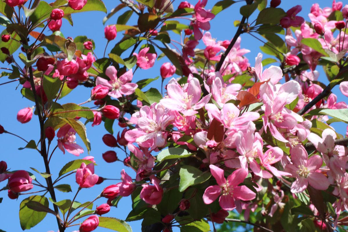 Весна в парке - Valery Remezau