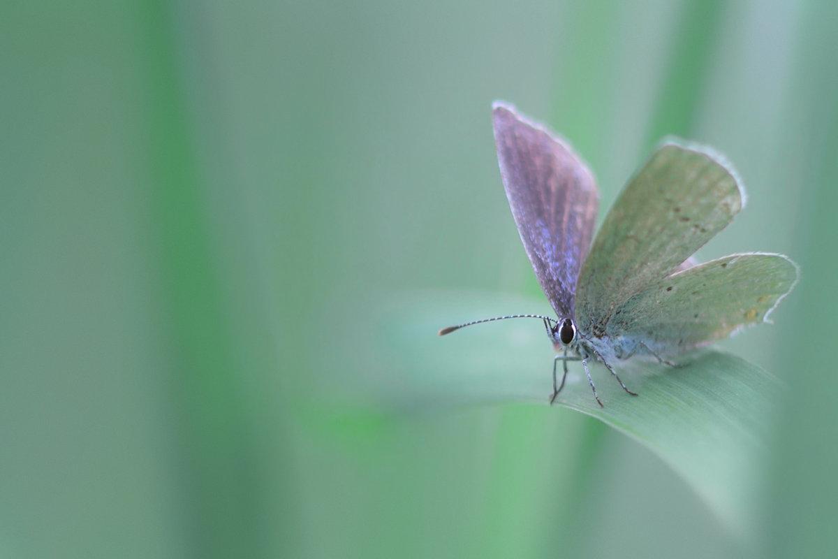 Голубяночка - Алёна :)
