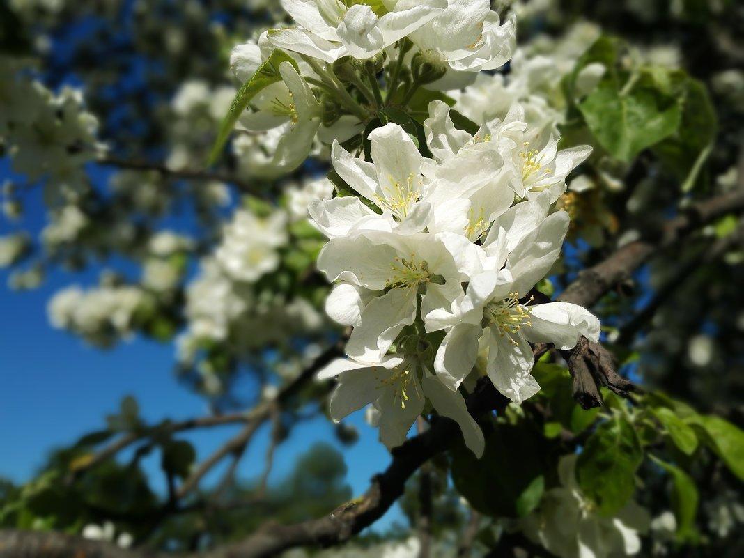 Весна, весна на улице, Весенние деньки! - Рома Григорьев