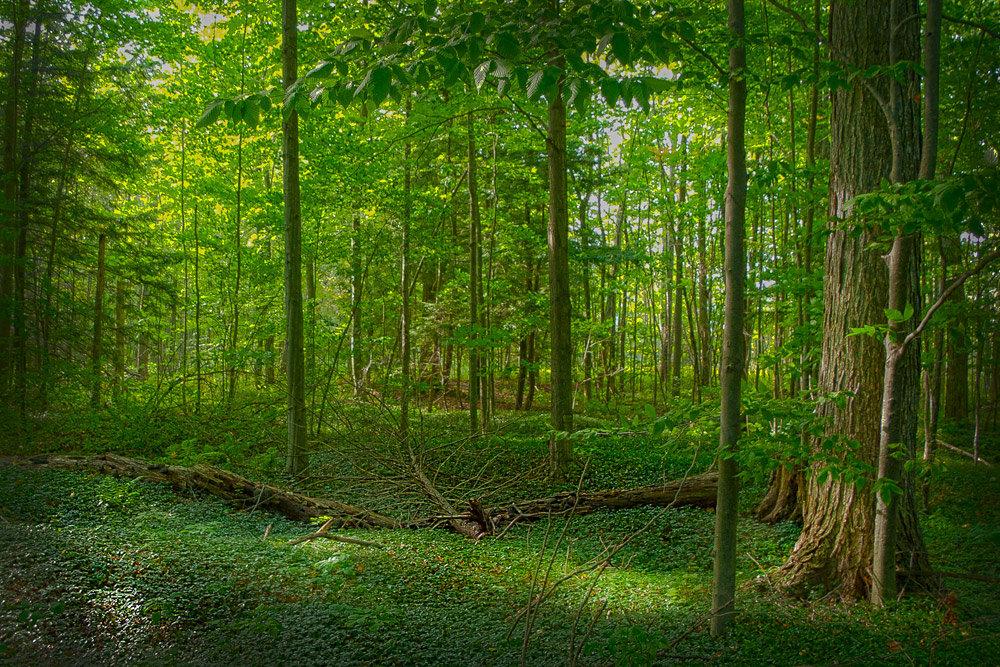 В лесу летом - Valery Remezau