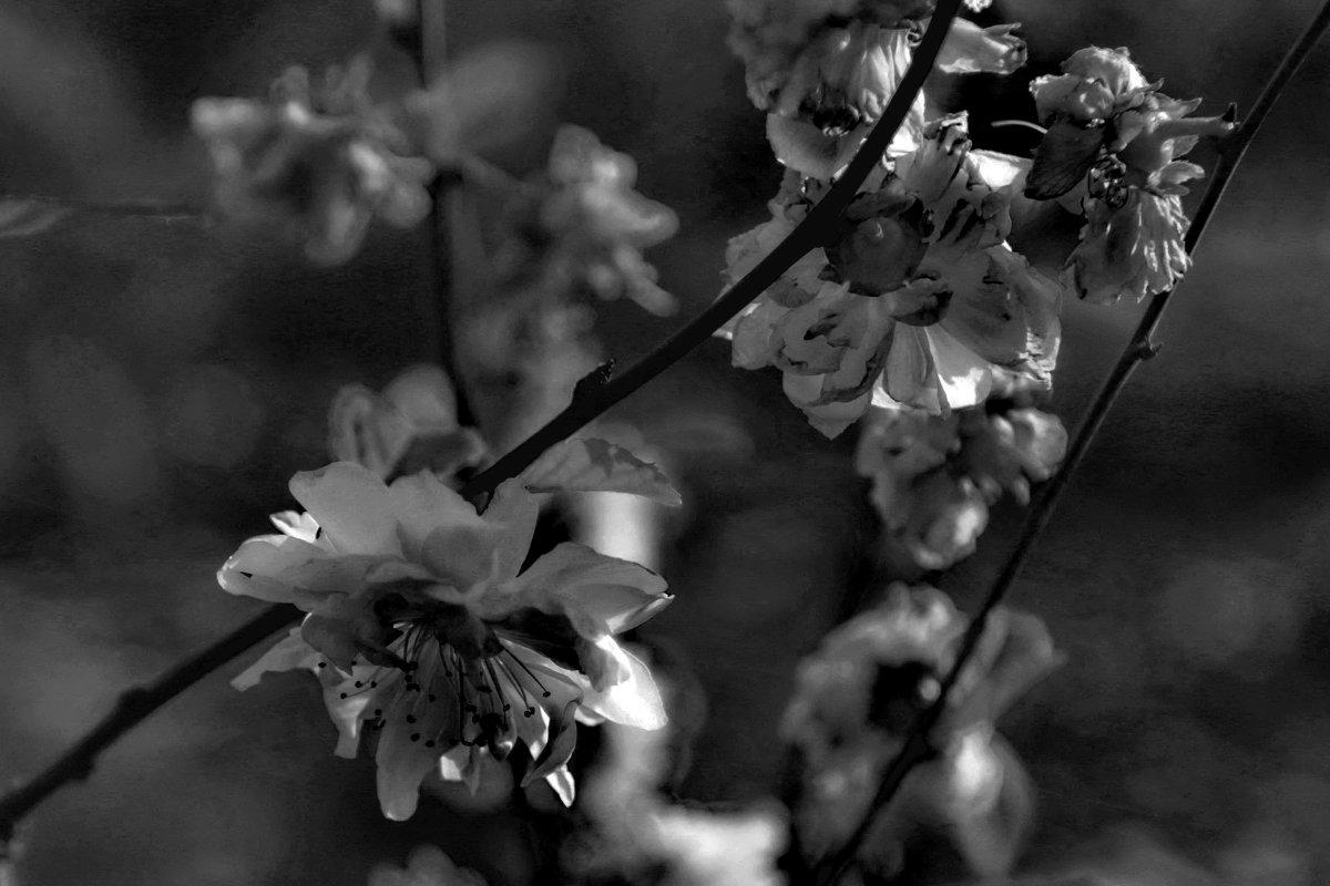 Весна - Александр Липецкий