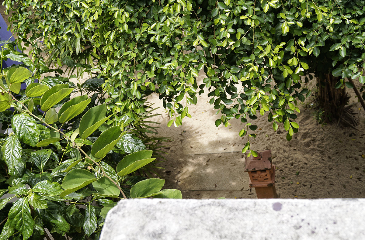 Вид с балкона. - Alex