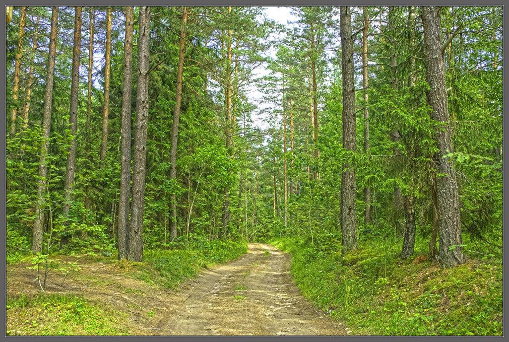 Лесная дорога - Valery Remezau