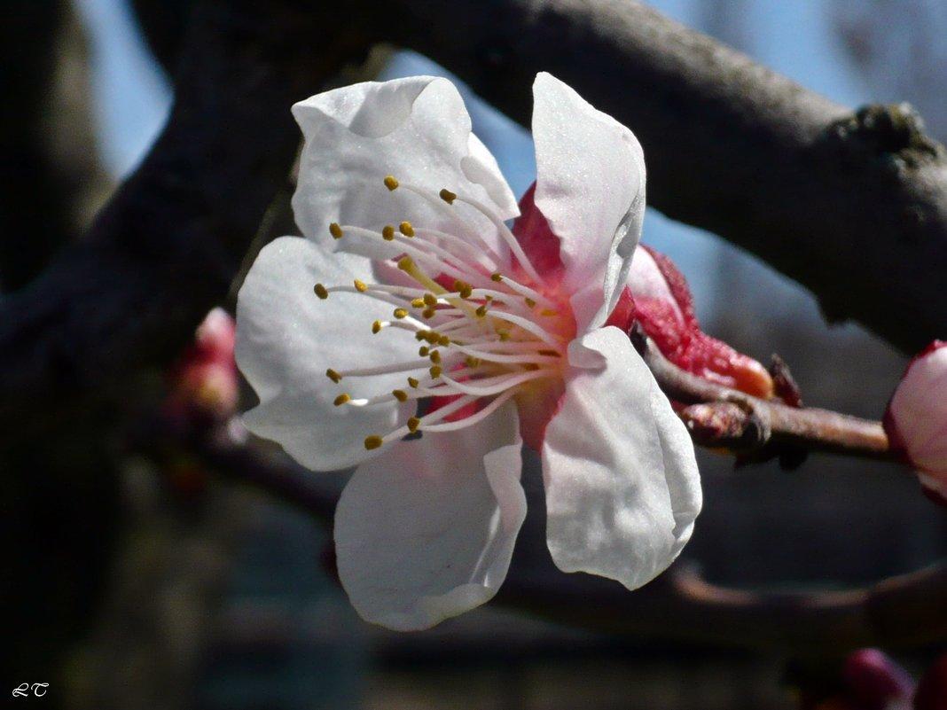 Весенний цвет - Татьяна Ларионова