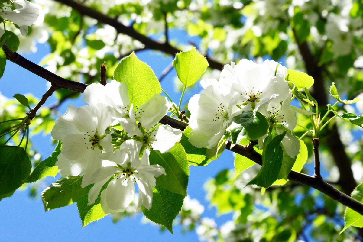 Нежность цветения - Полина Потапова