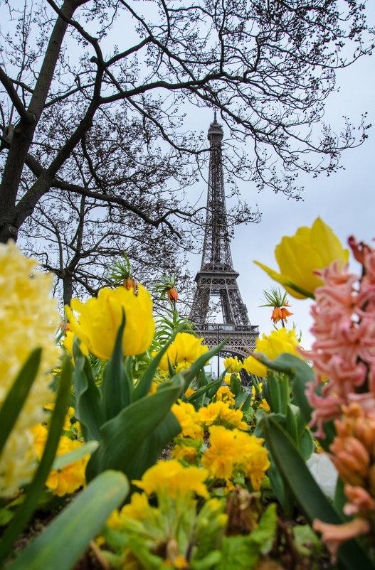 Париж весной - Наталия