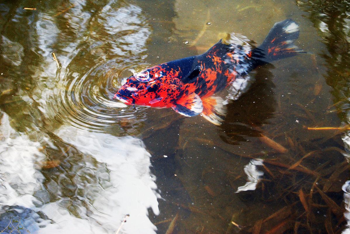 "DSC_0177   Фото Рыбалка: ""Золотая рыбка"" - Aleks Minin"