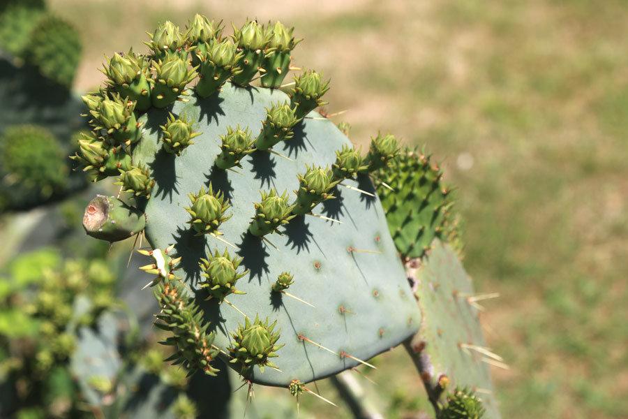 Cactus - Alexander Varykhanov