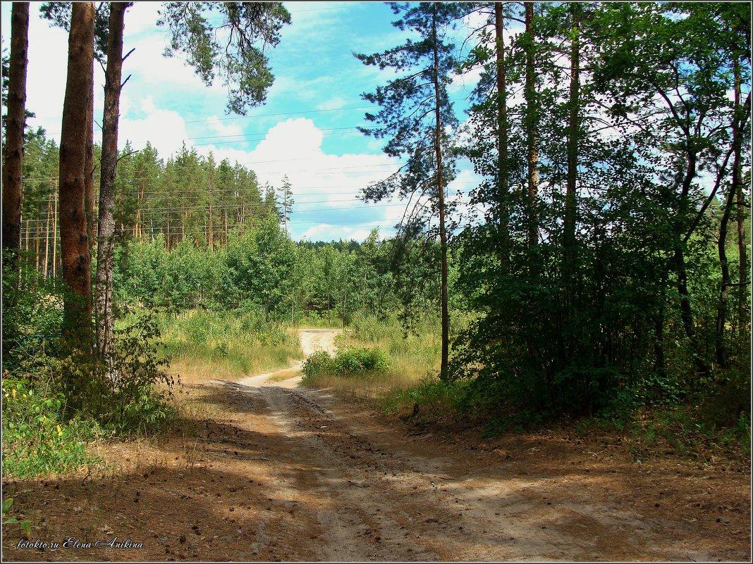 Нашли дорогу из леса..... - °•●Елена●•° ♀