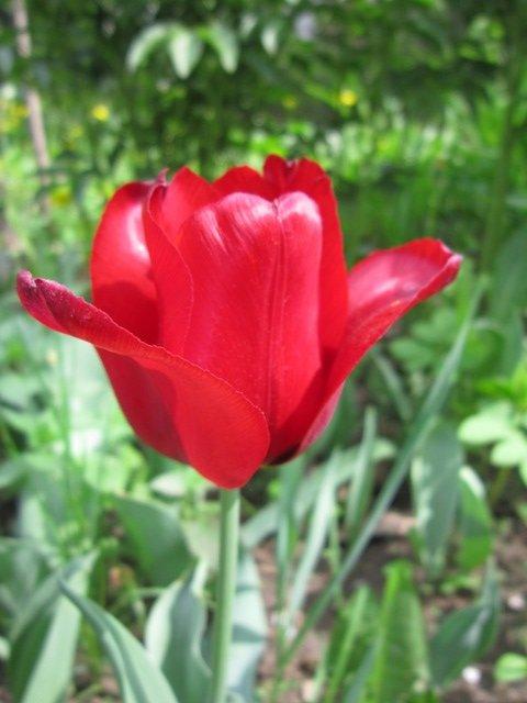 Красный цветок - Дмитрий Никитин