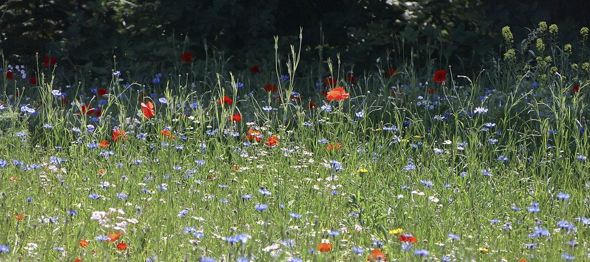Полевые цветы - Лилия .