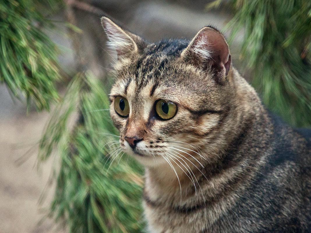 Кошка - Владимир Габов