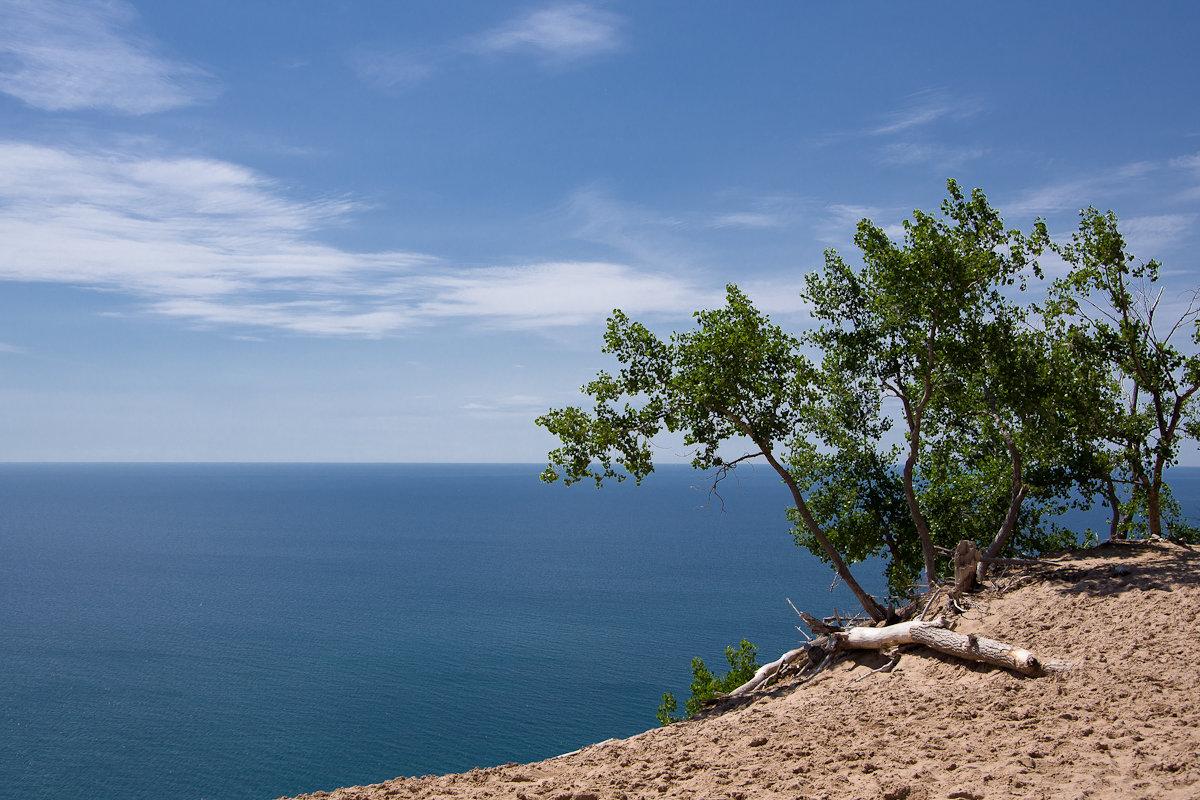 И на песке растут деревья - Александр Крупский