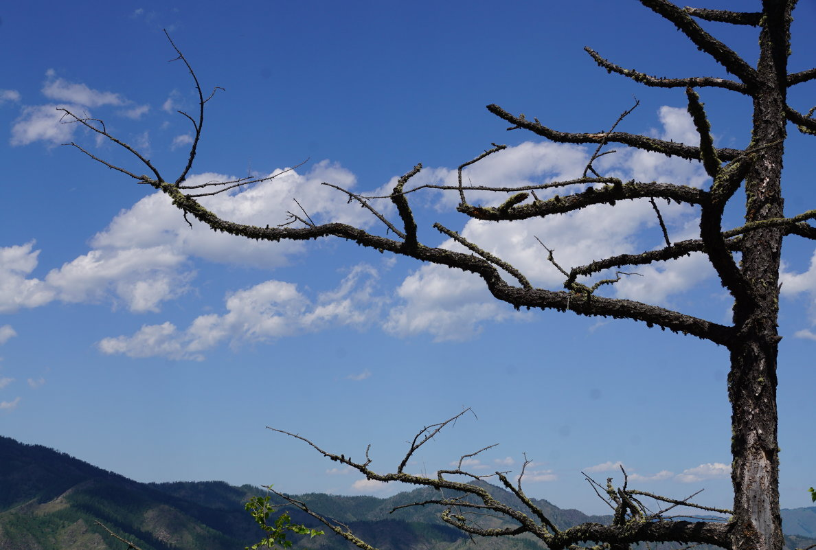 Такое дерево... - Наталия Григорьева