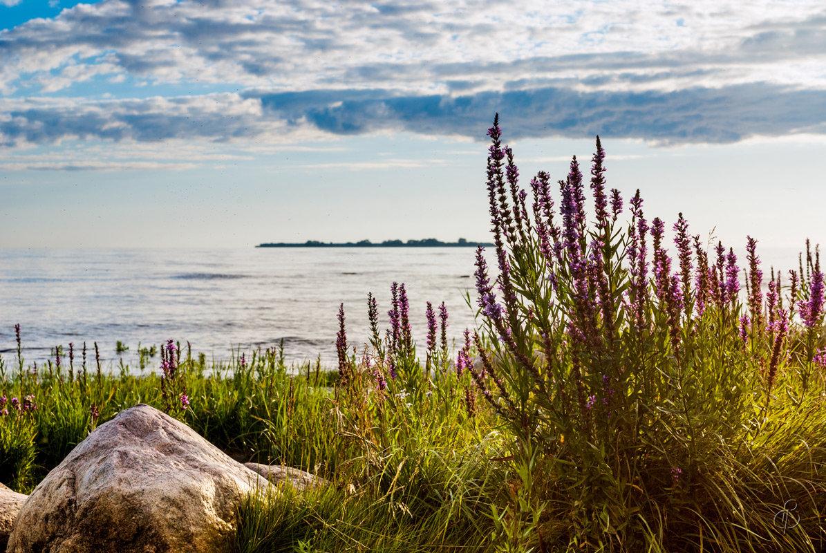 Финский залив (2) - Виталий