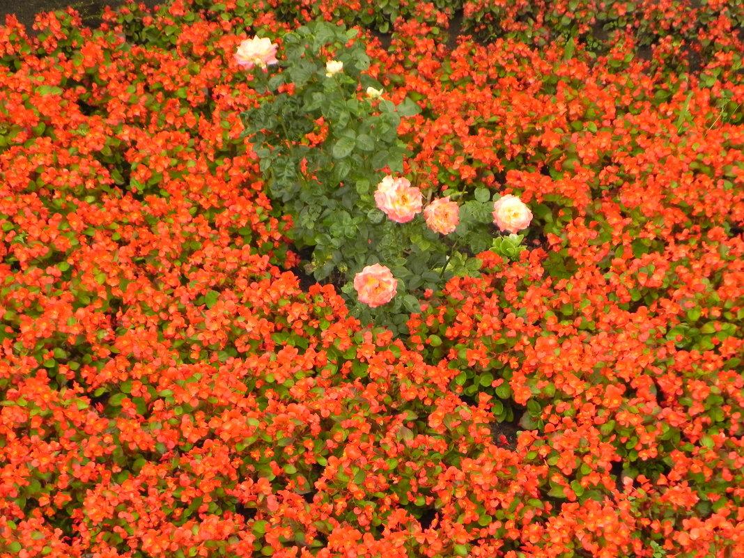 Цветы - Miroslav Georgiev