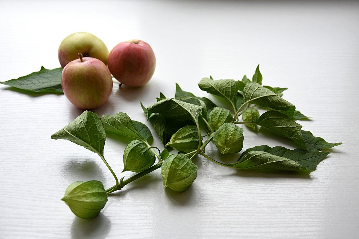 Физалис и яблоки - Лидия Суюрова
