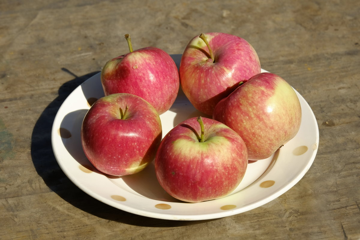 Созрели яблоки в саду у .... - ofinogen