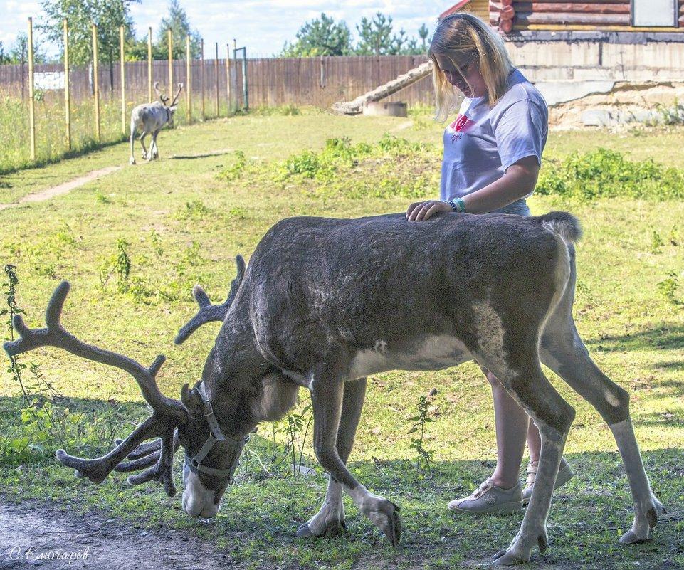 Трогательный зоопарк Оленей. Руза. - Сергей Ключарёв