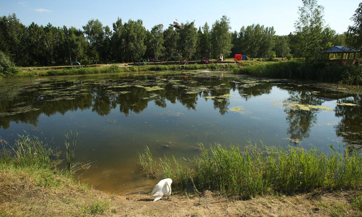 Царила в парке лета красота - Марина Щуцких