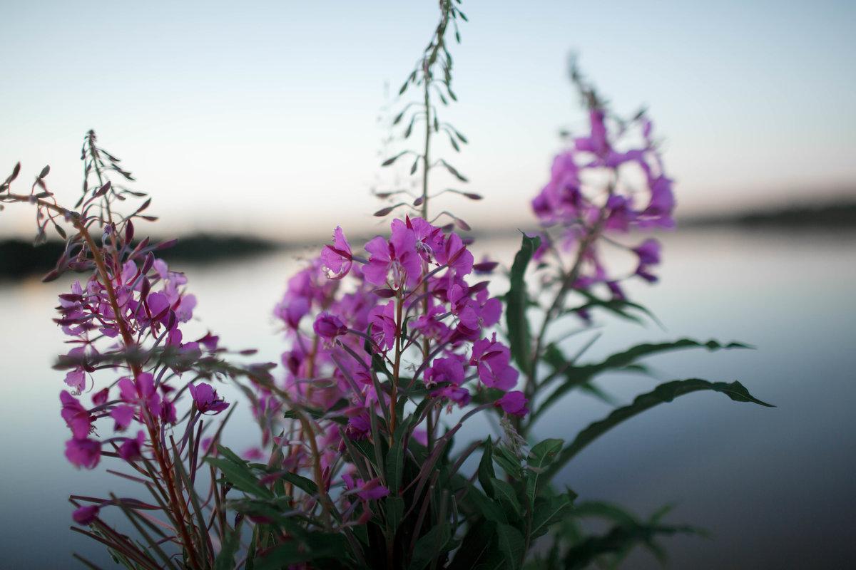 Небо цветочного цвета. - Екатерина Миколайчук